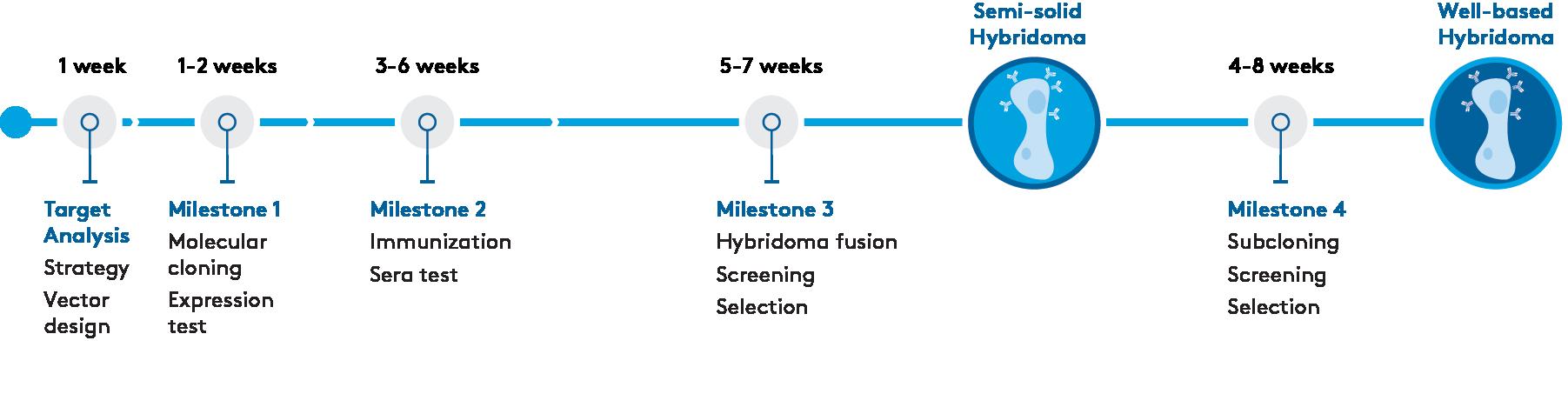 Advanced-Hybridoma