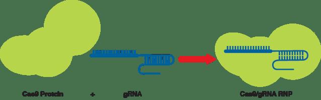 Aldevron RNP Fig 1