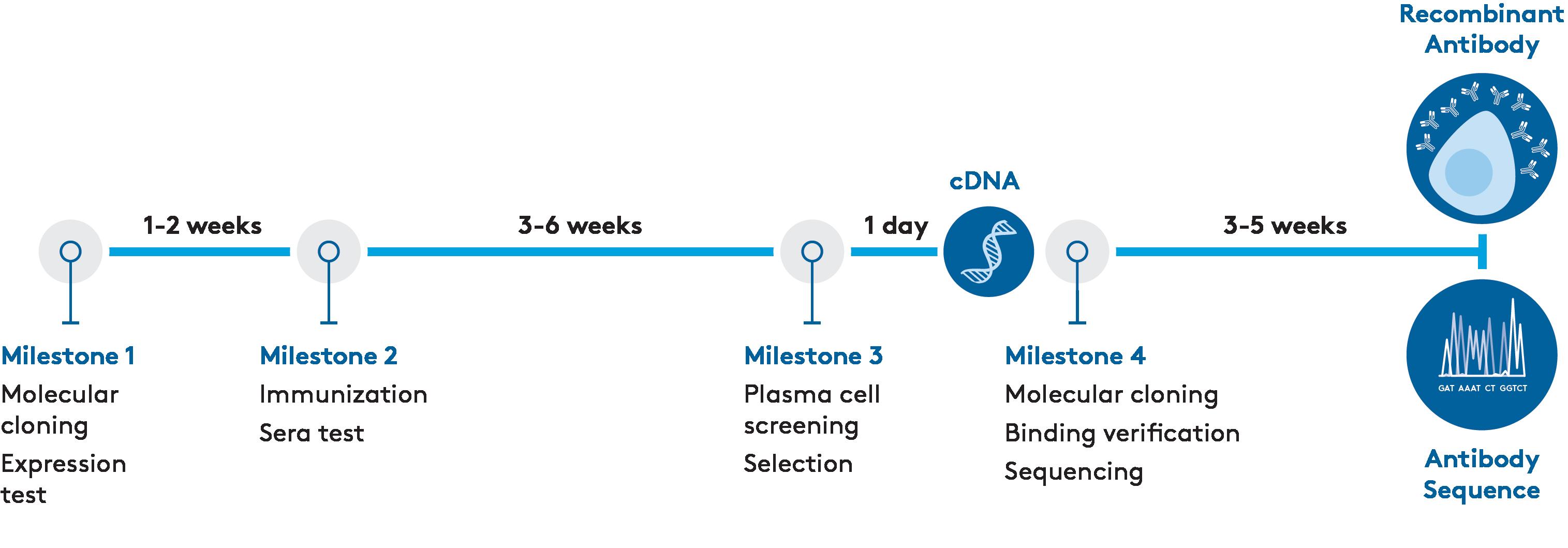 Aldevron Recombinant Antibody
