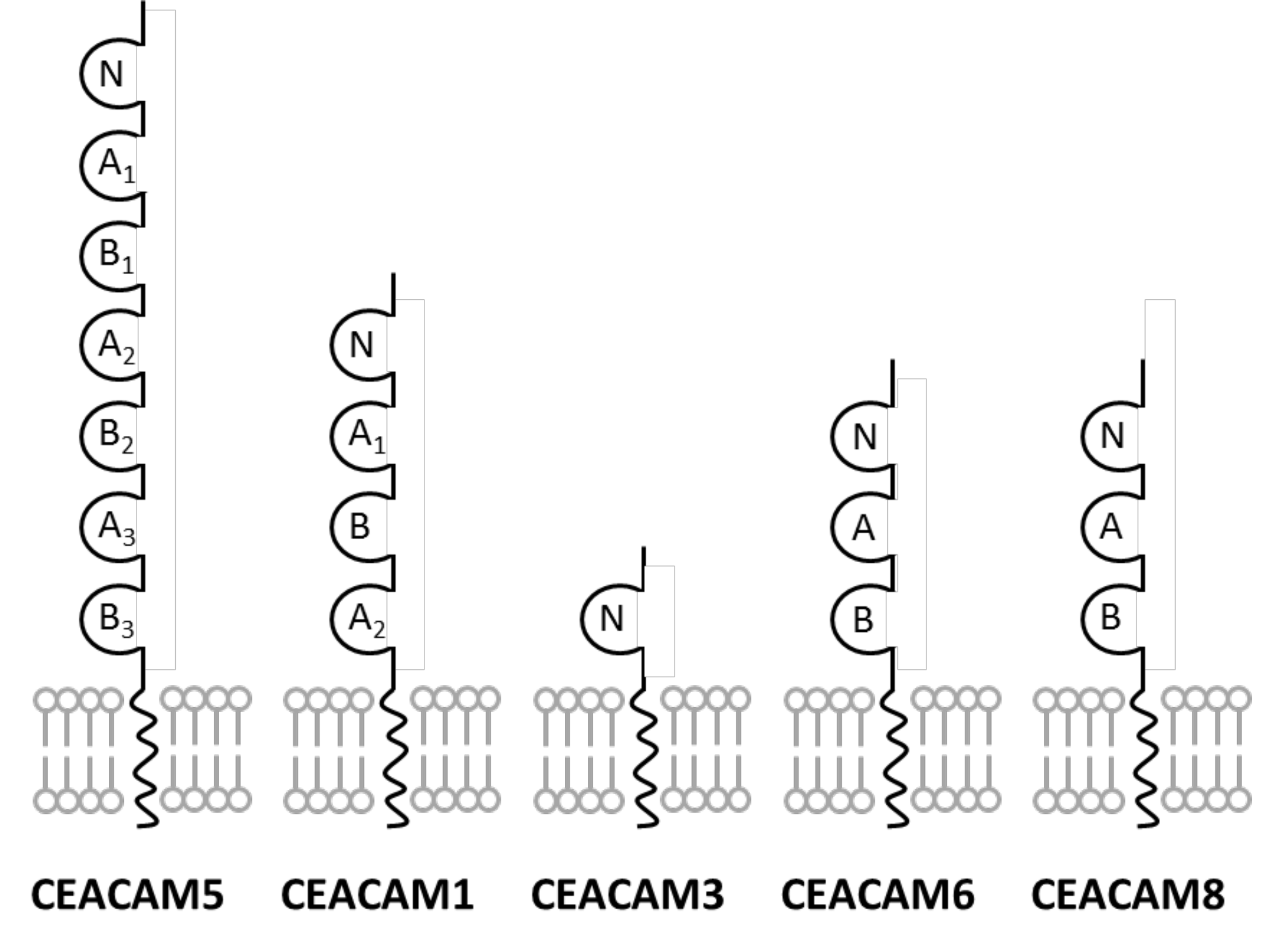 CEACAM comparison chart