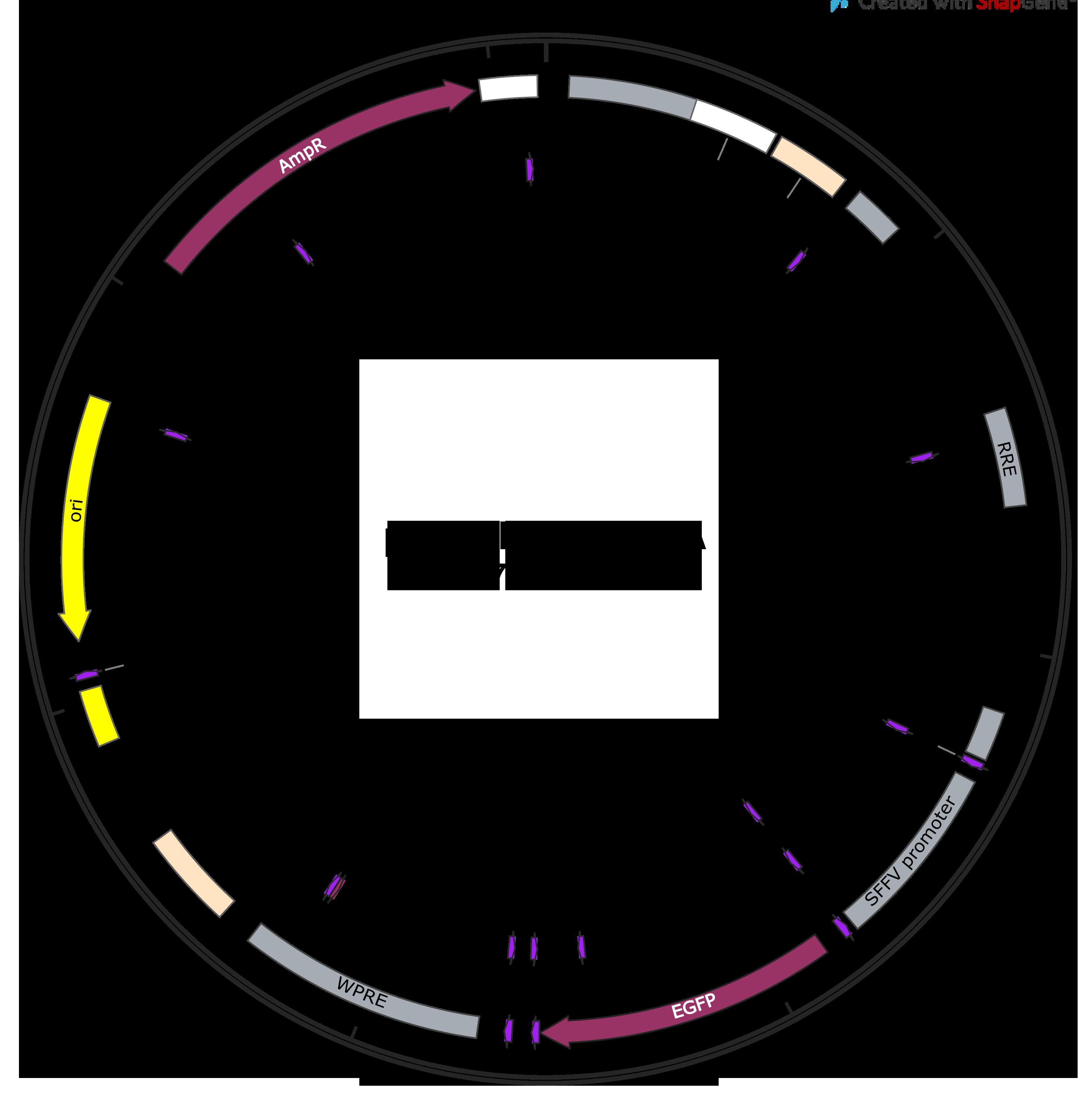 pALD-GagPol sequence-web