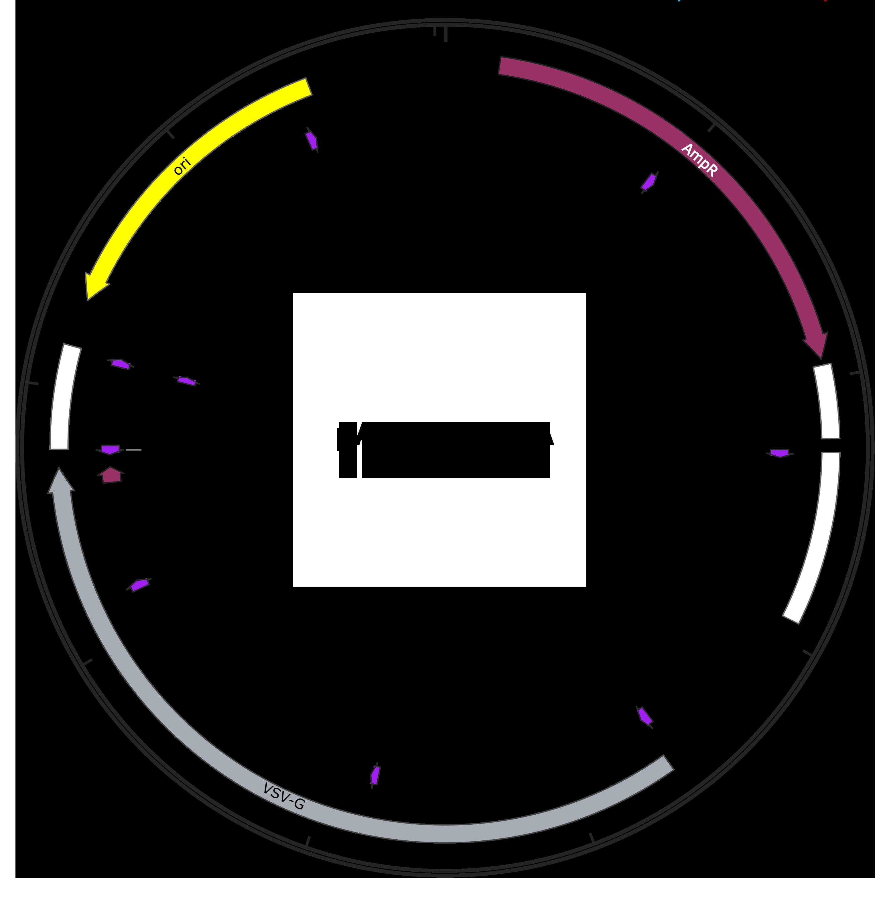 pALD-Rev sequence-web