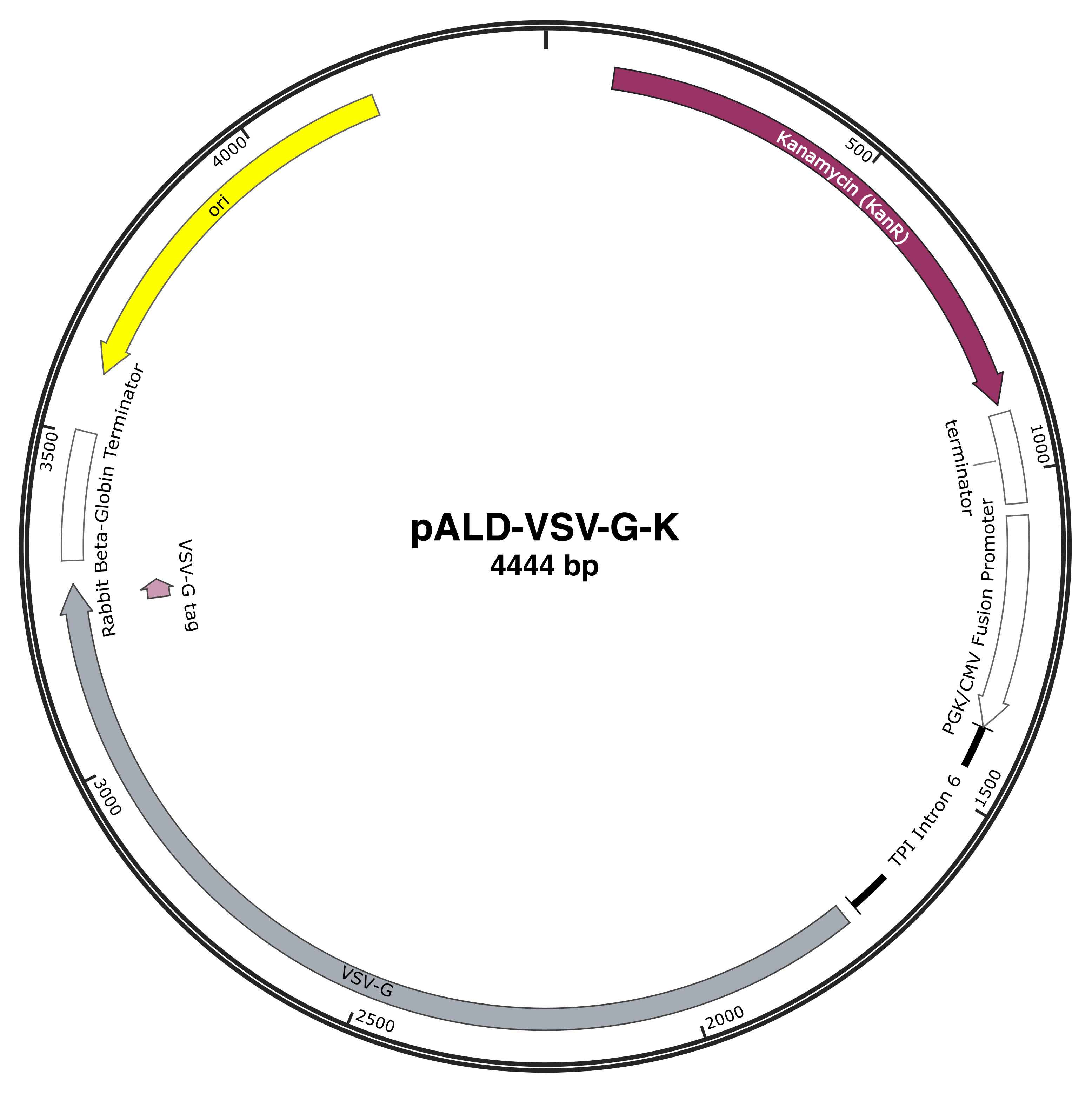 pALD-VSV sequence-web