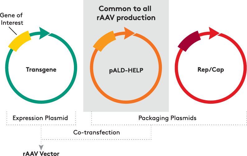 pALD-HELP Common@2x