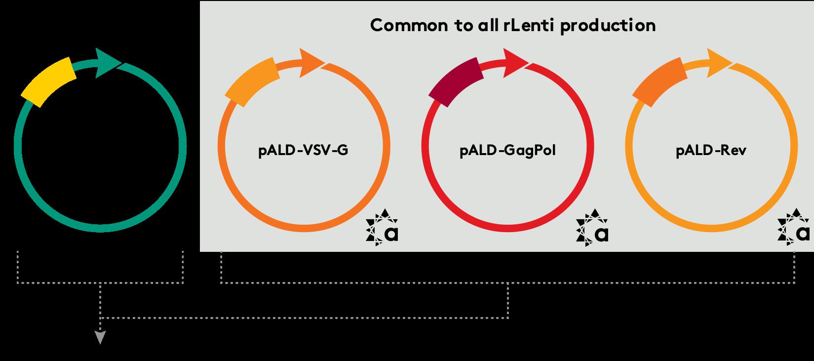 pALD-Lenti System