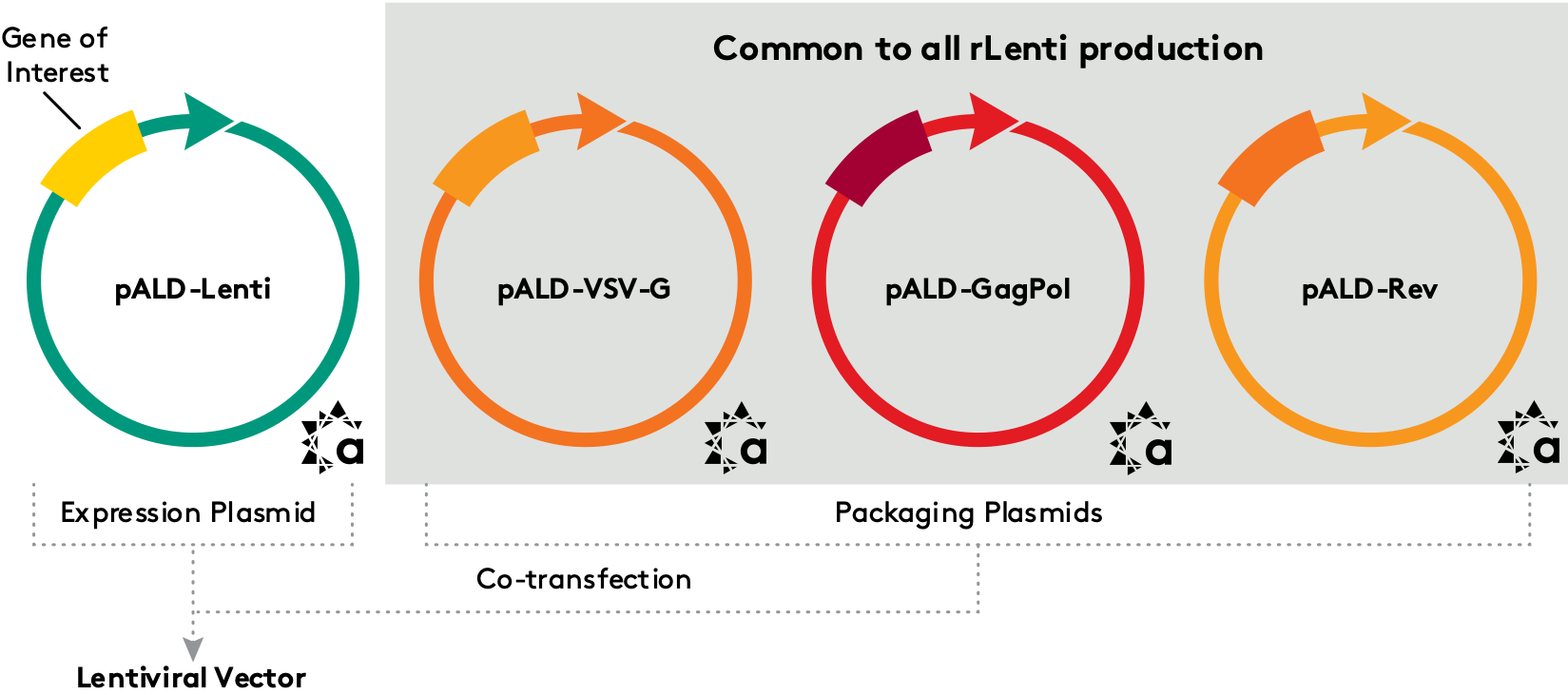 pALD-Lenti System - Common to all rLenti production