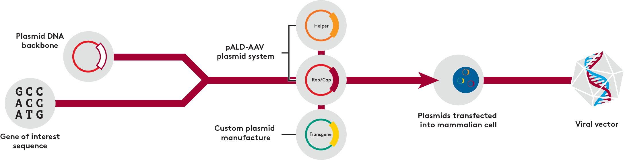 pALD AAV System Process Illustration